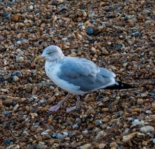 England_Eastbourne_0007