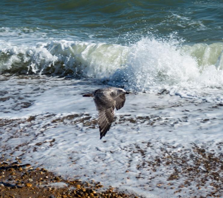 England_Eastbourne_0046