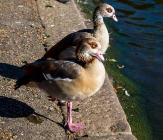England_London_St.James Park_0037