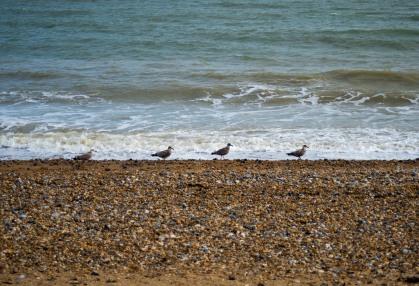 England_Pevensey Bay_0041
